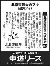 北海道遺産 こぼれ話 37 北海道最大のフキ